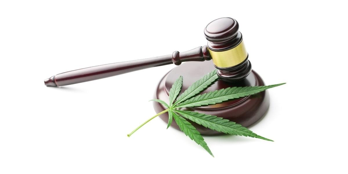 Décontamination de Cannabis maison
